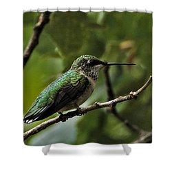 Hummingbird On Branch Shower Curtain