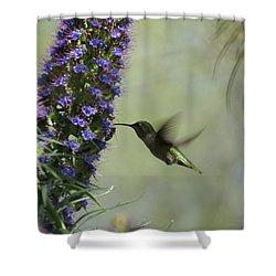 Hummingbird Sharing Shower Curtain by Ernie Echols