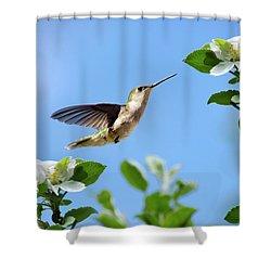 Hummingbird Springtime Shower Curtain by Christina Rollo