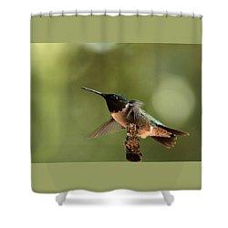 Hummingbird Take-off Shower Curtain by Sheila Brown