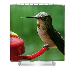 Hummingbird Takes A Break Shower Curtain