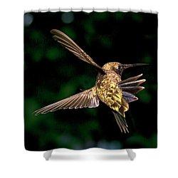Hummingbird Taking Off Shower Curtain