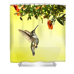 Hummingbird Under The Floral Canopy Shower Curtain