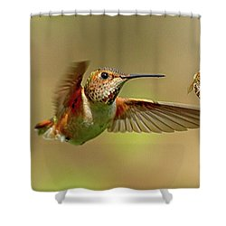 Hummingbird Vs. Bees Shower Curtain