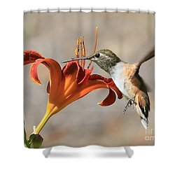 Hummingbird Whisper  Shower Curtain