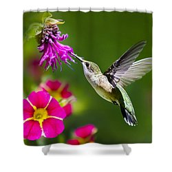 Hummingbird With Flower Shower Curtain
