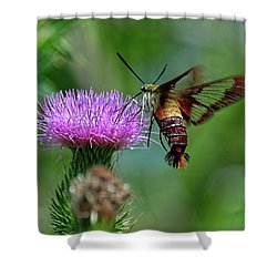 Hummingbirdbird Moth Dining Shower Curtain