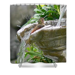 Hummingbirds Do Take Baths Shower Curtain
