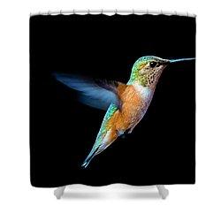 Hummming Bird Shower Curtain