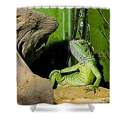 Humorous Pet Iguana Photo Shower Curtain by Carol F Austin