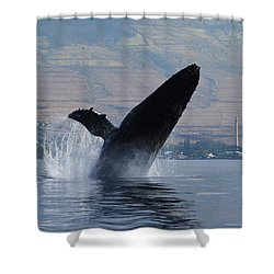 Humpback Whale Breach Shower Curtain