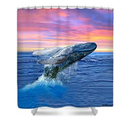 Humpback Whale Breaching At Sunset Shower Curtain by Glenn Holbrook
