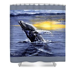 Humpback Whale Breaching Shower Curtain by Bob Patterson