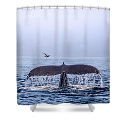 Humpback Whale Flukes Shower Curtain by Janis Knight