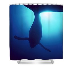 Humpback Whale Megaptera Novaeangliae Shower Curtain by Flip Nicklin