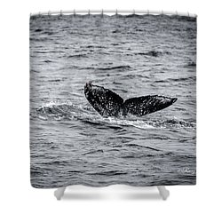Humpback Whale Tail Shower Curtain