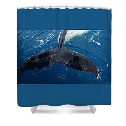 Humpback Whale Tail With Human Shadows Shower Curtain by Gary Crockett