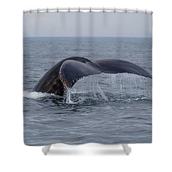 Humpback Whale Shower Curtain by Trace Kittrell