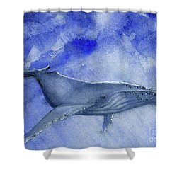 Humpback Yearling Under Our Boat Shower Curtain by Randy Sprout