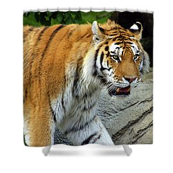 Hungry Cat Shower Curtain by Gordon Dean II
