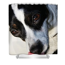 Shower Curtain featuring the photograph Hungry Dog by Jorgo Photography - Wall Art Gallery