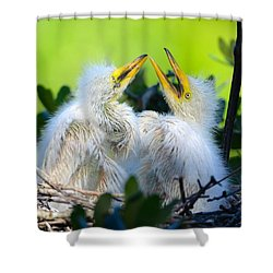 Hungry Egret Chicks Shower Curtain