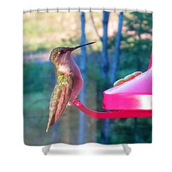 Hungry Hummer Shower Curtain by Jeanette Oberholtzer