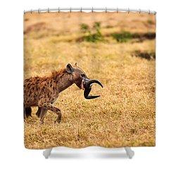 Hungry Hyena Shower Curtain by Adam Romanowicz