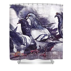 Hungry Pigeons Watercolor Shower Curtain