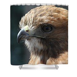 Shower Curtain featuring the photograph Hunter's Spirit by Laddie Halupa