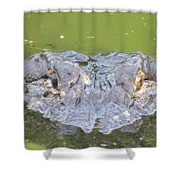 Hunters Stare Shower Curtain by Kimo Fernandez