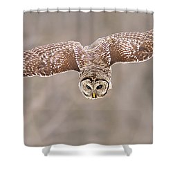 Hunting Barred Owl  Shower Curtain by Mircea Costina Photography