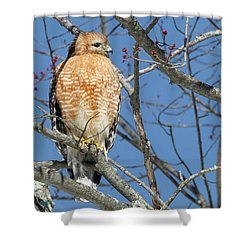 Shower Curtain featuring the photograph Hunting by Bill Wakeley