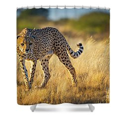 Hunting Cheetah Shower Curtain by Inge Johnsson