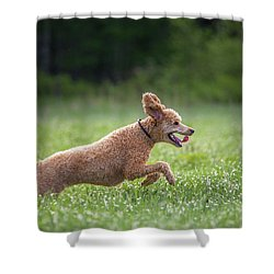 Hunting Dog Shower Curtain
