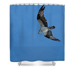 Hunting Osprey Shower Curtain