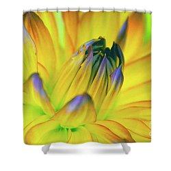 Husky Colors Shower Curtain
