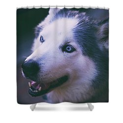Husky Shower Curtain by Dennis Baswell
