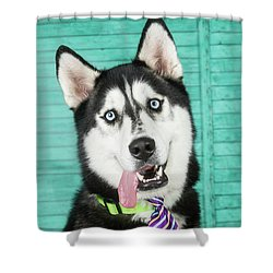 Husky With Tie Shower Curtain by Stephanie Hayes