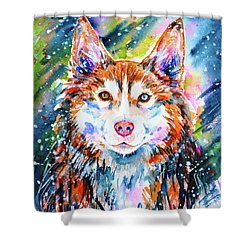 Shower Curtain featuring the painting Husky by Zaira Dzhaubaeva