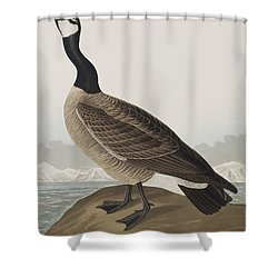 Hutchins's Barnacle Goose Shower Curtain by John James Audubon
