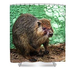 Hutia, Tree Rat Shower Curtain