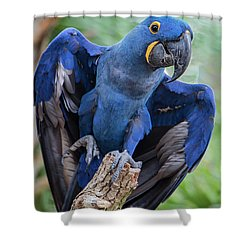 Hyacinth Macaw Shower Curtain