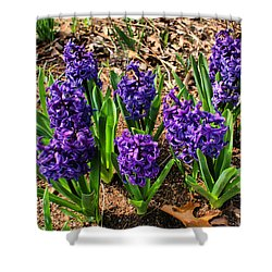 Hyacinth Shower Curtain by Rick Friedle
