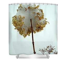 Hydrangea Blossom In Snow Shower Curtain