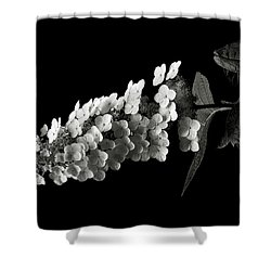 Hydrangea In Black And White Shower Curtain