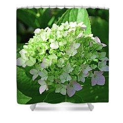 Hydrangea No. 100-1 Shower Curtain