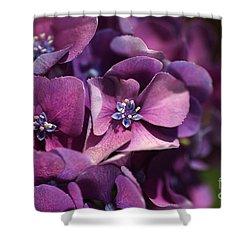 Hydrangea Passion  Shower Curtain