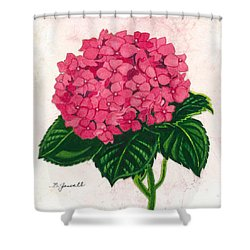 Hydrangea-perfectly Pink Shower Curtain