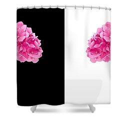 Hydrangeas On Black And White Shower Curtain